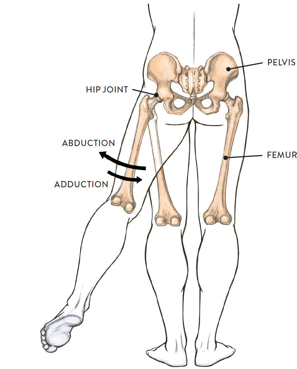 Definition of adduction in anatomy 4836697 - follow4more.info