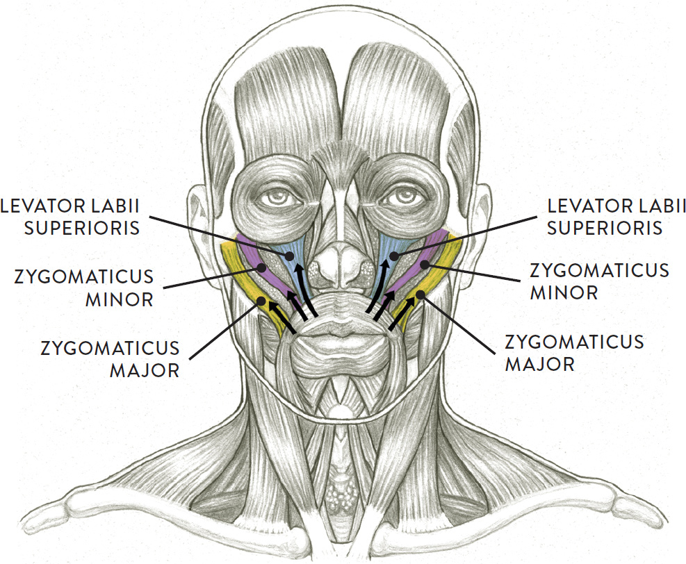 Facial Muscles And Expressions Classic Human Anatomy In Motion