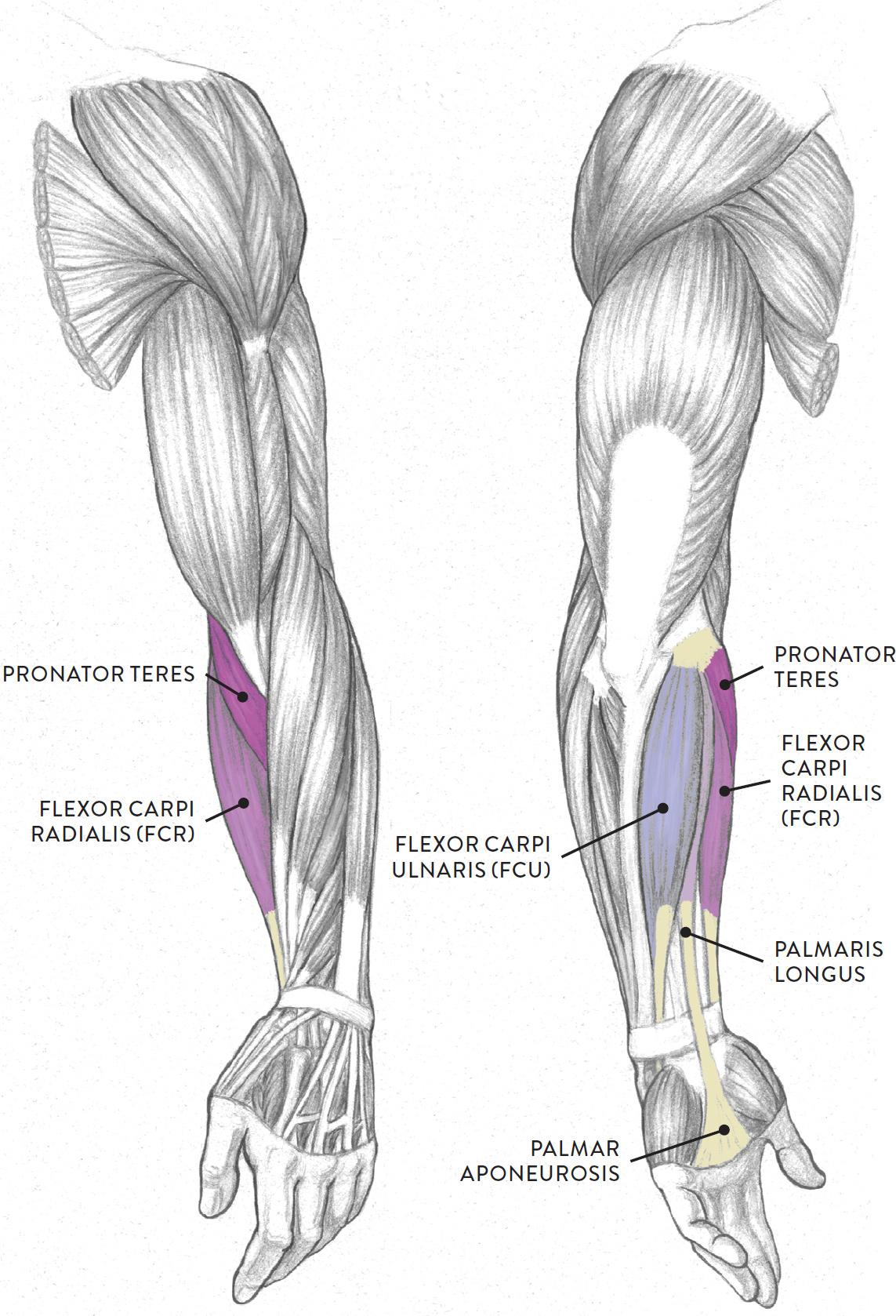 Fantastisch Human Anatomy In Motion Bilder Menschliche Anatomie