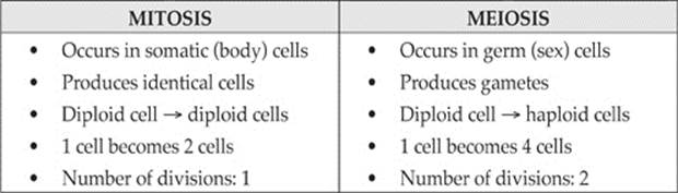 difference between mitosis and meiosis