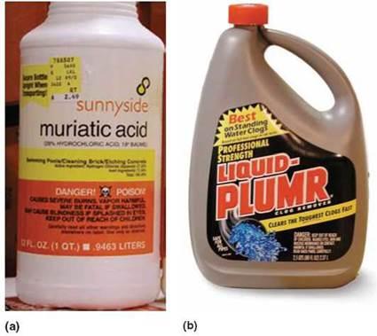Acids Bases And Salts The Basics Of Life
