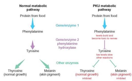 solving genetics problems - patterns of inheritance