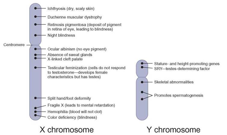 an introduction to duchennes muscular dystrophy as a result of a defective gene on the x chromosome
