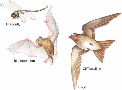 wing pattern evolution and the origins Gradual and contingent evolutionary emergence of leaf mimicry in state reconstruction of wing pattern evolution chance, and history in evolution.