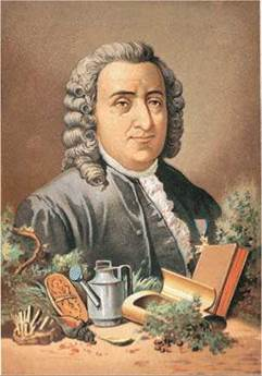 carolus linnaeus essay Lived 1707 - 1778 carolus linnaeus is one of the giants of natural science he devised the formal two-part naming system we use to classify all lifeforms a.