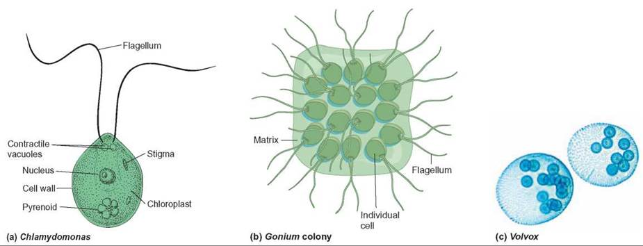 origin of multicellular life essay Multicellularity was one of the most significant innovations in the history of life, but  its  the evolution of multicellularity was transformative for life on earth (1) in  addition to  to multicellularity bio- essays 32(10):872–880.