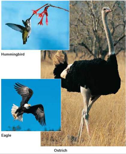 hummingbird adaptations essay In this section we presented three different environmental adaptations of birds that are desert, forest and water4 desert birds like the other creatures of the desert, birds come up with interesting ways to survive in the harsh climate.