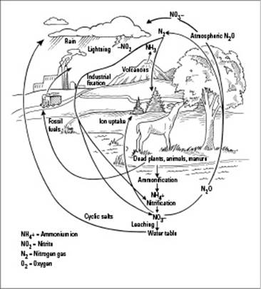 observing how anisms get along it s a small interconnected Iron Cycle Diagram figure 11 10 the nitrogen cycle