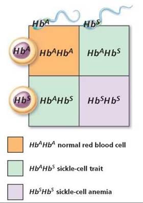Genetics and Human Inheritance - Biology of Humans