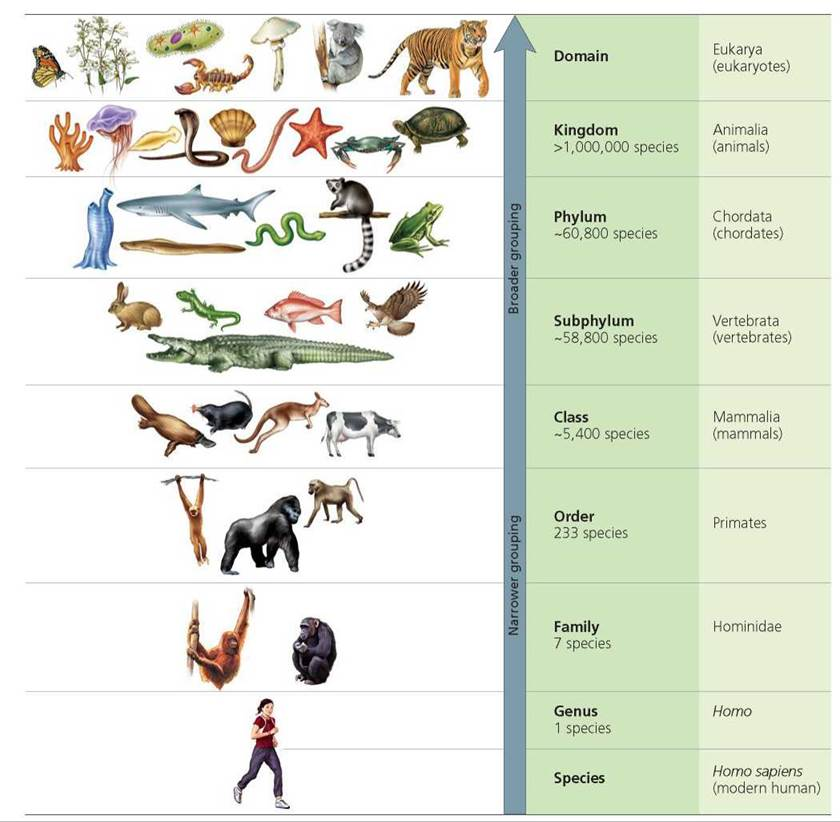 The role of melanin in the human biological system and human evolution