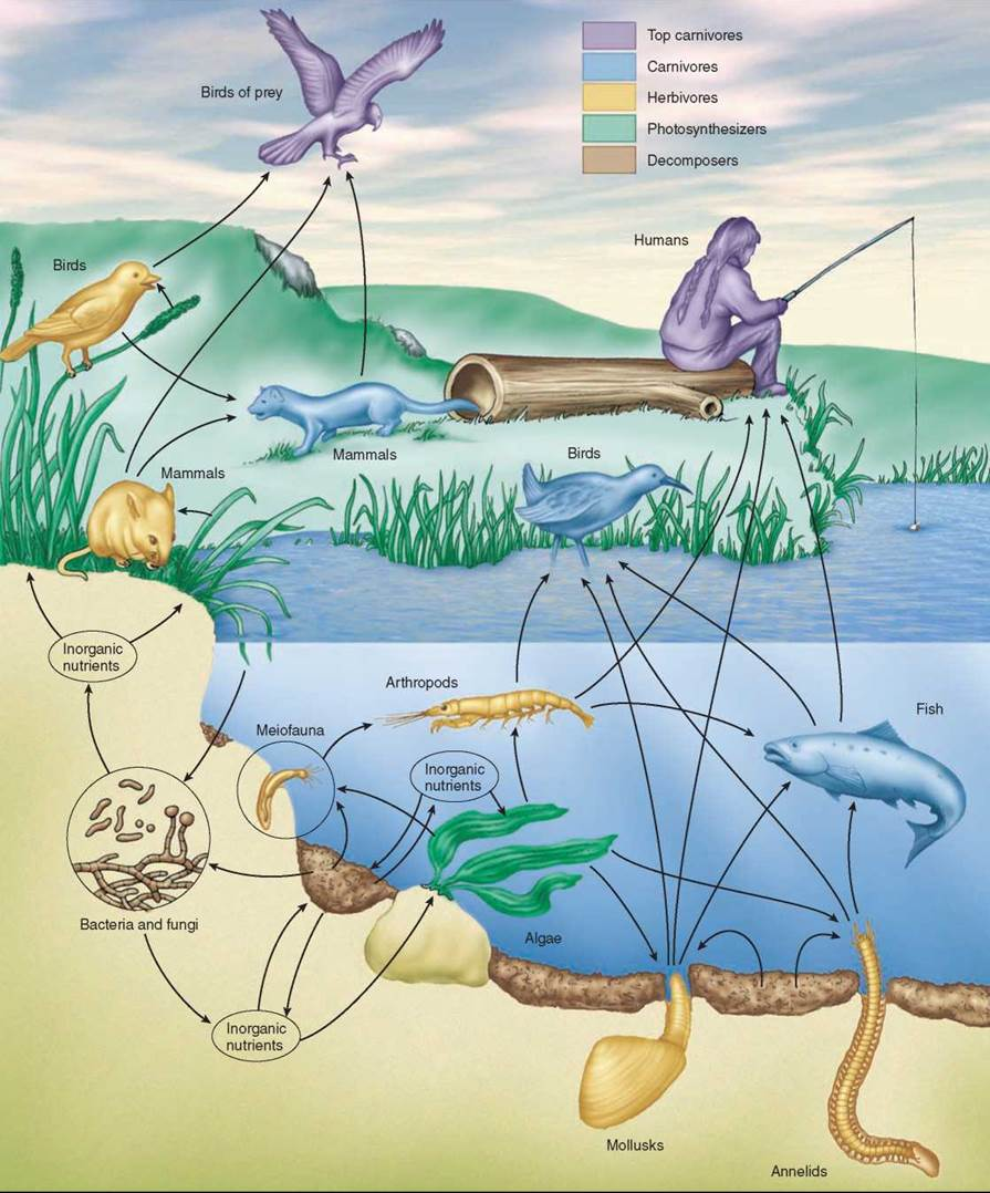 Energy Flows Through Ecosystems - Ecosystems - The Living ...  Crappie Lake Food Chain