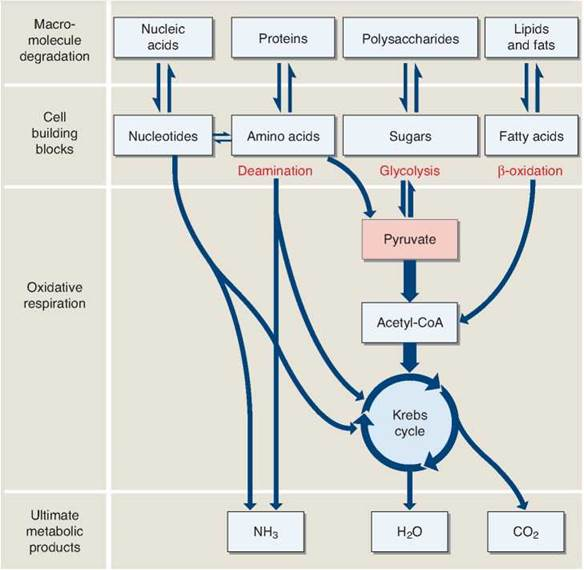 what diet get you out of glycolysis