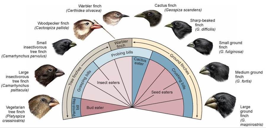 beak of the finch Immediately download the the beak of the finch summary, chapter-by-chapter analysis, book notes, essays, quotes, character descriptions, lesson plans, and more - everything you need for studying or teaching the beak of the finch.