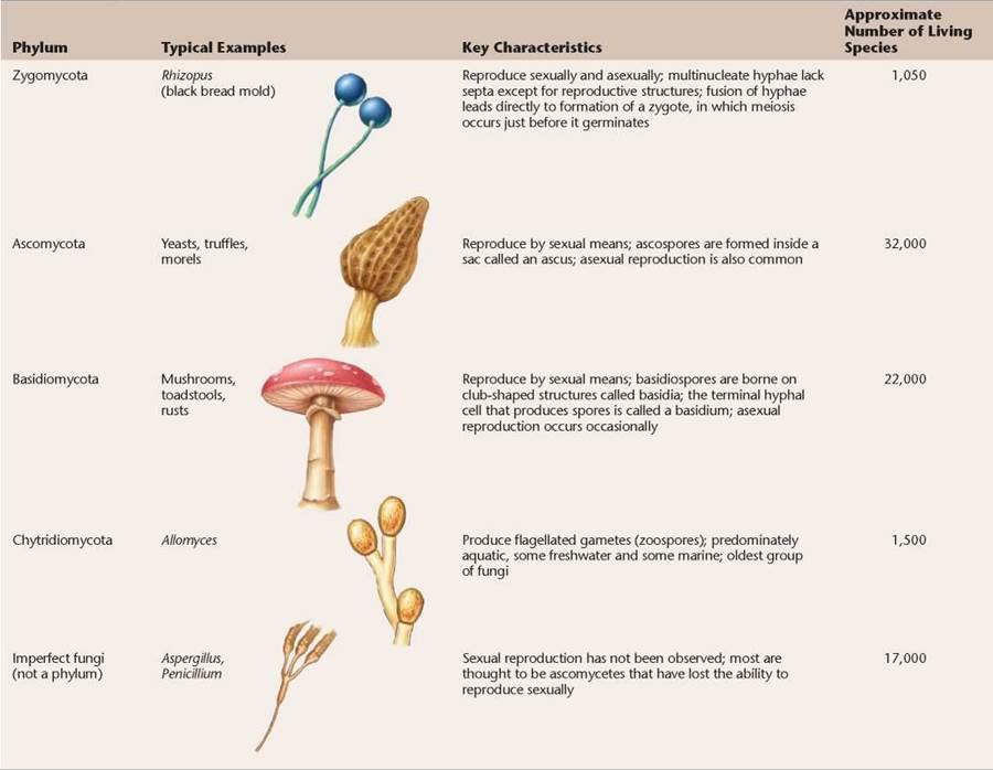 Kinds of Fungi - Fungi Invade the Land - The Evolution and