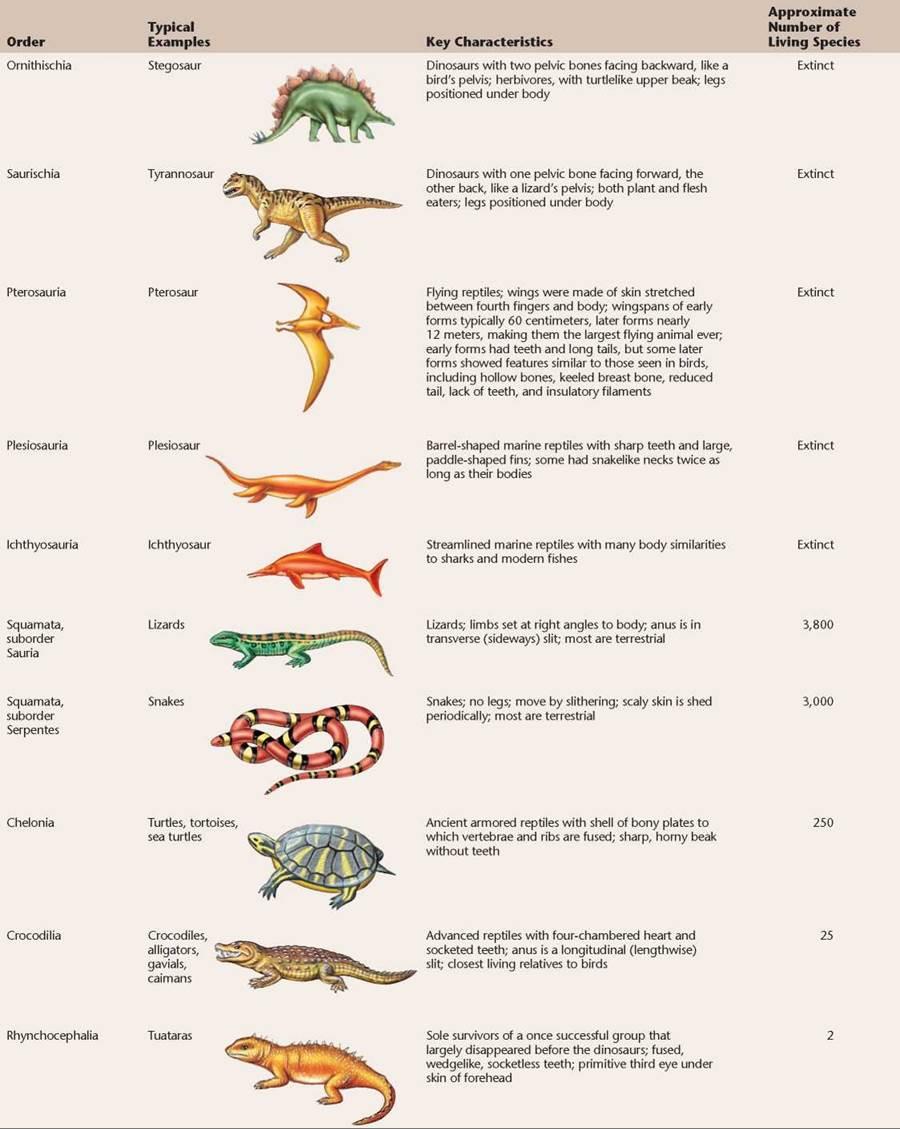 Reptiles Conquer The Land