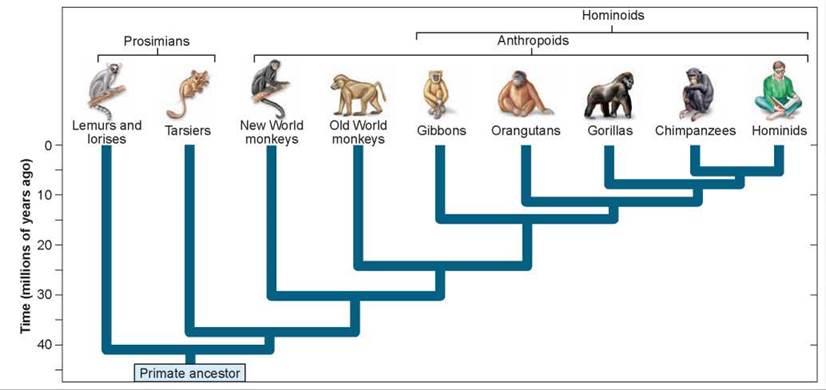 Glyptodon  Wikipedia