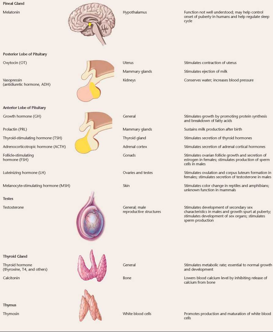 The Thyroid Parathyroid And Adrenal Glands Chemical Signaling