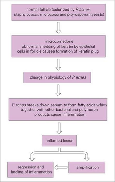 Infections Of The Skin Soft Tissue Muscle And Associated