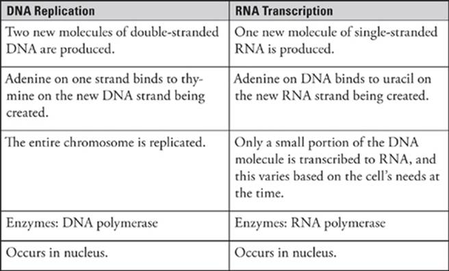 transcription and translation - subject review
