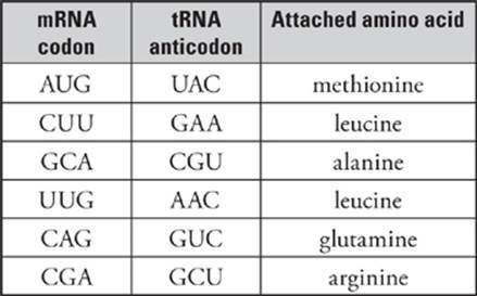 Trna Anticodon