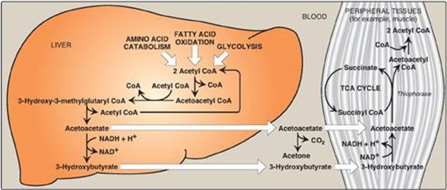 fatty acid and essay lipids Contents: essay on the meaning of lipids essay on the functions of lipids essay on lipids these lipids contain fatty acids with carbohydrates and.