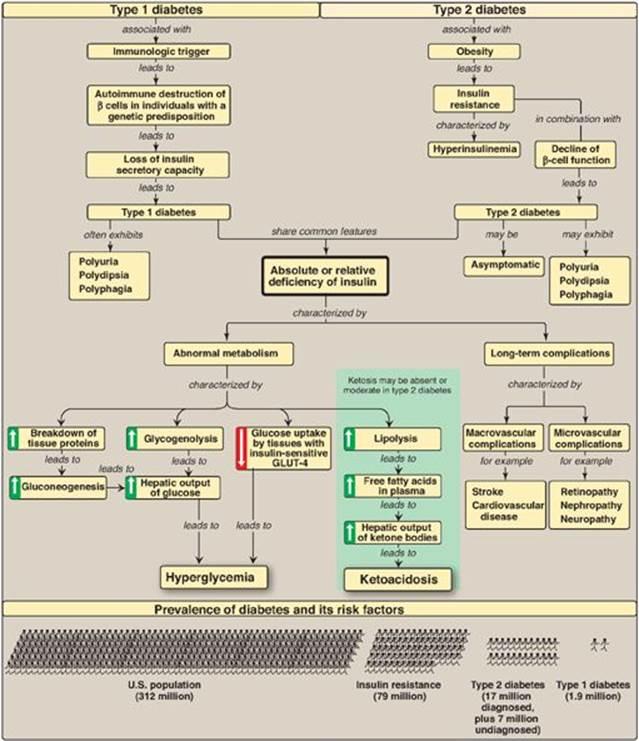 Diabetes Mellitus Integration Of Metabolism Lippincott S