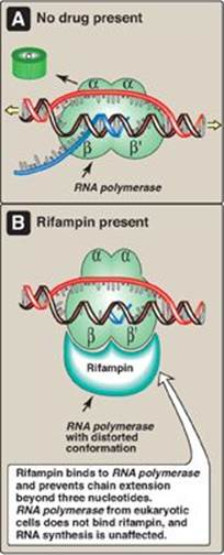 Rna Structure  Synthesis  And Processing