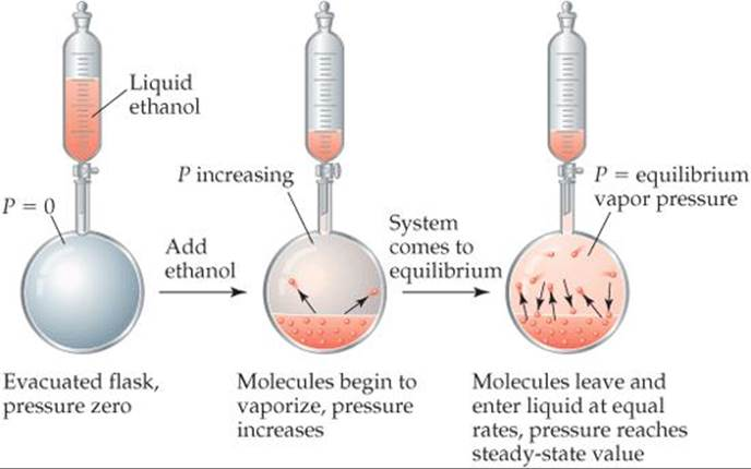 VAPOR PRESSURE - LIQUIDS AND INTERMOLECULAR FORCES - CHEMISTRY THE ...