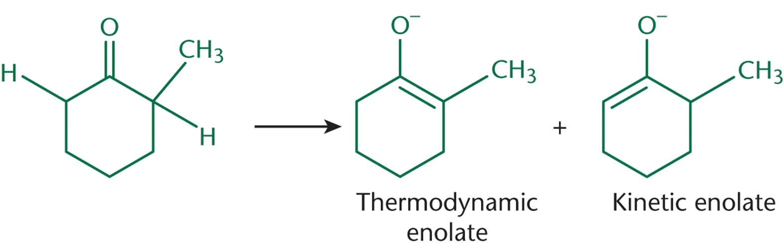 Kinetic and Thermodynamic Enolates The kinetic enolate forms more quickly,  but is less stable than the thermodynamic enolate.