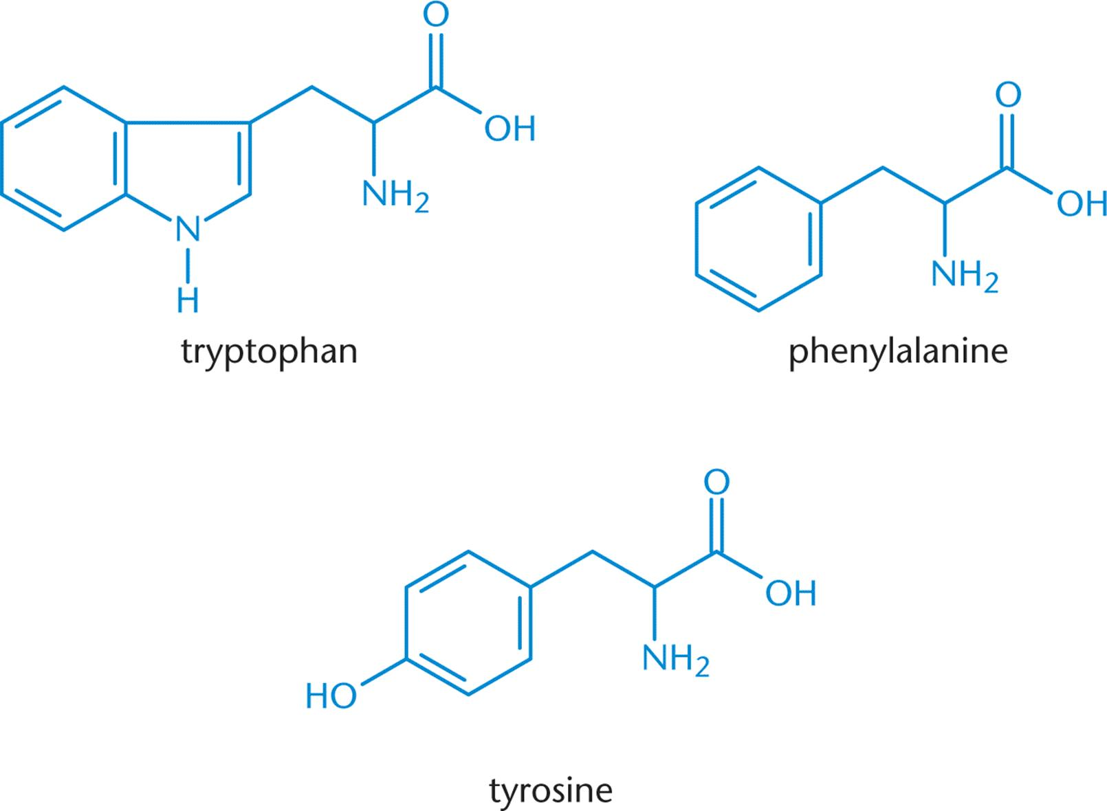Amino Acids Found in Proteins - Amino Acids, Peptides, and ...