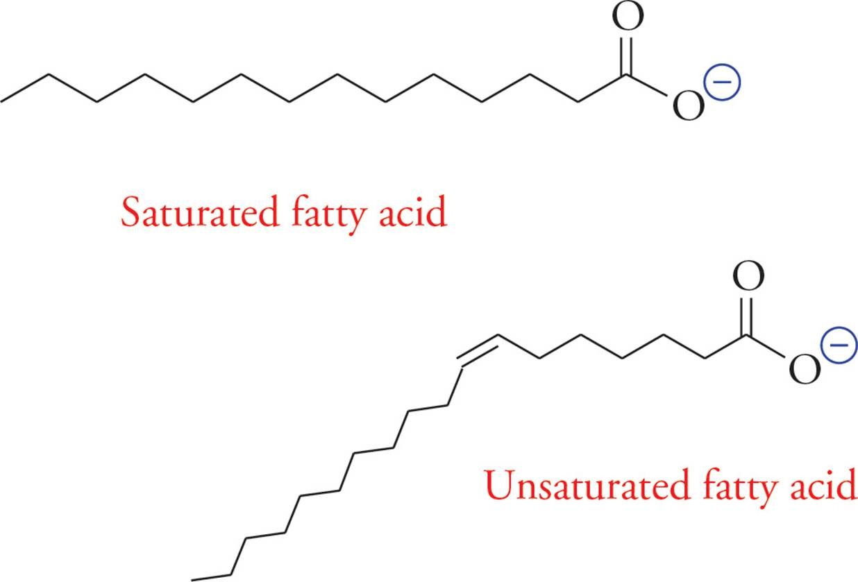 Biologically important molecules mcat biology and biochemistry unsaturated fatty acids have one or more double bonds in the tail these double bonds are almost always z or cis pooptronica