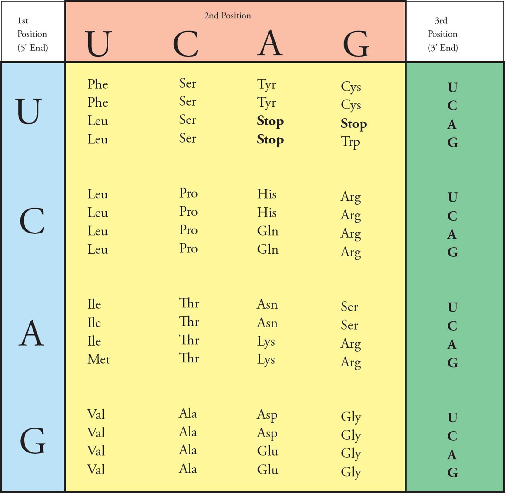 MCAT Biology And Biochemistry